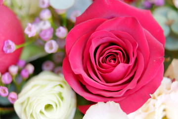 Romantic red rose close up illusion