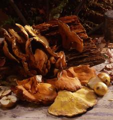 Wild mushrooms on log, onions