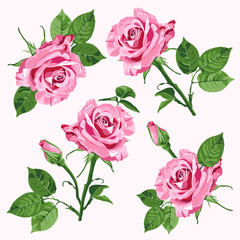Pink vector roses and leave seamless pattern