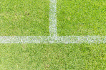 White line on green grass of a soccer field.