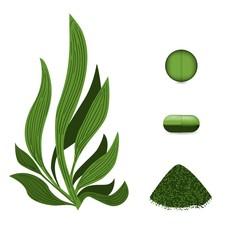 Spirulina algae pills, spirulina powder. Vegetarian food.  Plant vector Illustration.