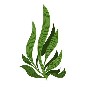 Spirulina algae Underwate. Vegetarian food.  Plant vector Illustration.