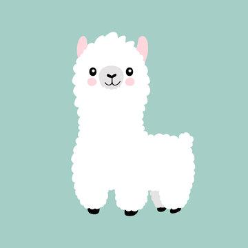 Llama cartoon cute alpaca. Lama animal vector isolated illustration. Cute funny hand drawn art. Design for card, sticker , fabric textile, t shirt. Children, kid modern trendy style