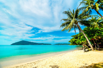 Empty beach with a palm tree on a tropical island. Vacation at the sea.