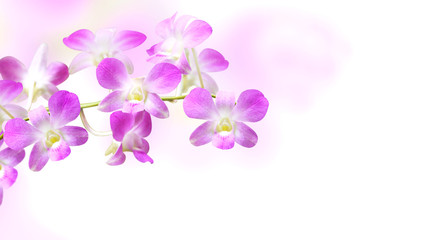 Blurred background with flowers of orchid