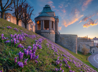 Crocuses blooming on Haken Terrace in Szczecin, Poland.