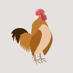 rooster vector illustration flat style profile side