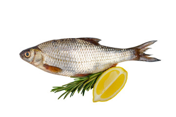 Raw carp fish with rosemary and lemon isolated on white background.