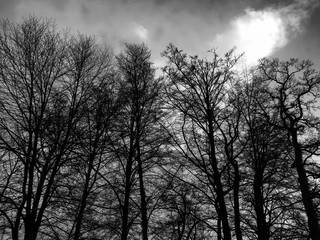 Black and white photo of trees.