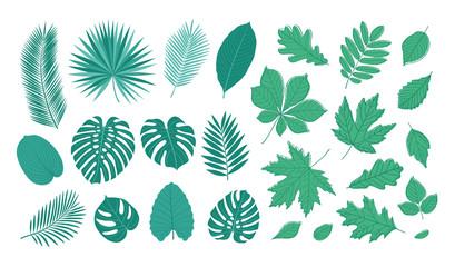 Big set of summer leaves. Sketch, floral elements for your design. Vector illustration.