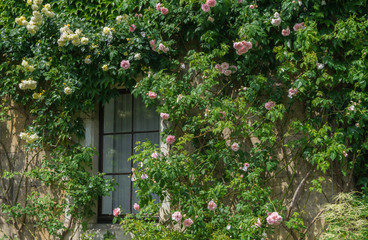 Window in a small old house with roses around it