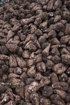 Pile of sugarbeets
