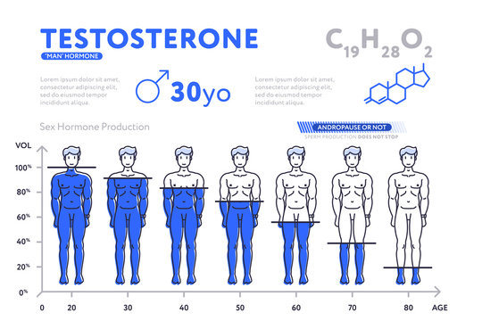 Flat design of infographic diagram showing male hormone testosterone during lifetime decreasing up to age.