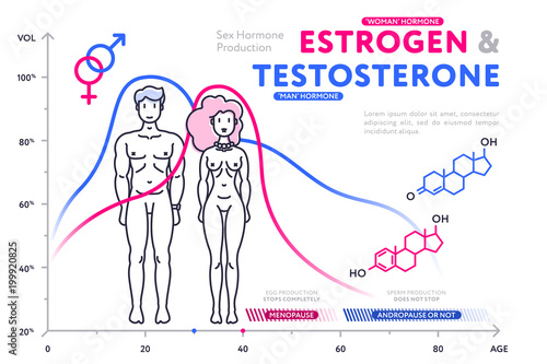 Colorful diagram in flat style showing estrogen and