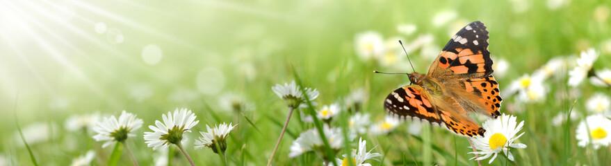 Fotobehang Pistache Schmetterling 428