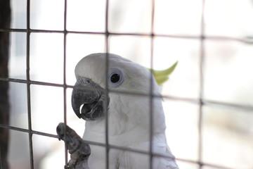 parrot bird sitting on the net