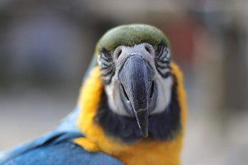 portrait of a parrot bird sitting
