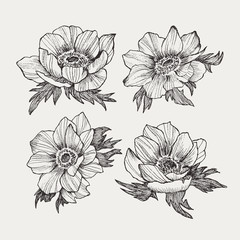 Vector vintage anemone set. Hand drawn illustration. Great for wedding invitations, birthday, valentines, save the date and greeting cards. Engraved decor element