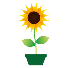 cute sunflower in pot decorative icon vector illustration design