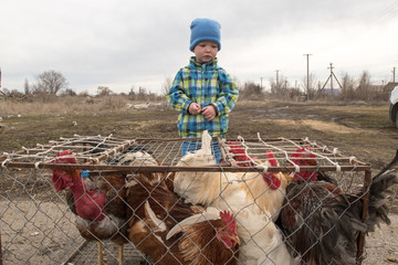 Two village charming boy brother came to agricultural market to choose chickens and roosters for breeding in their personal subsidiary farm. The concept of small peasant chicken farms