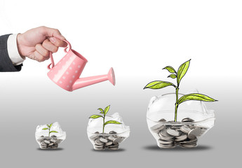 Top view Investment is like planting trees. Take care it will provide a good growth on color background.money tree drawn concept for business investment, savings and making money.