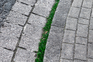 Grasbewachsene Bordsteinkante