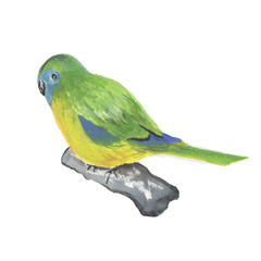 Parrot Isolated on white background. Tropics,  birds.  background