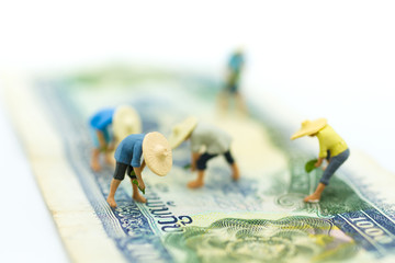 Miniature people: Farmers do farming on the banknotes. Image use for Farmer's career in the community, Income from agriculture.