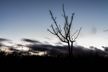 Silhouette of a small tree and moving clouds