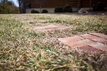 Low angle view of brick paving in grass