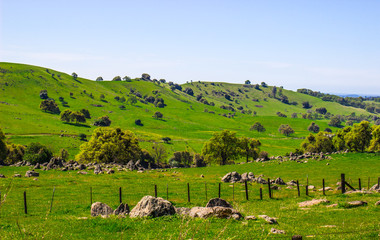 Lush Green Foothills In Sierra Nevada