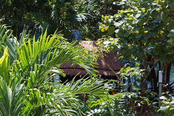 Tropical jungle with wooden hut on a sunny day