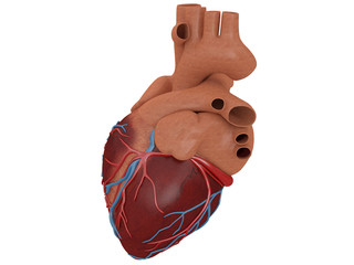 heart real isolated on a white background with veins 3d rendering