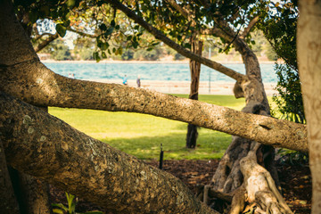 Royal Botanic Gardens, Sydney, Australia