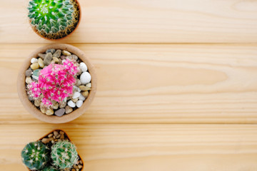 Cactus on wood background with copy space, top view, flat lay, succulent houseplant trendy design concept