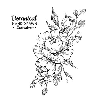 Vintage flower bouquet. Vector drawing. Peony, rose, leaves and