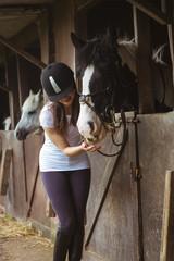 Female rider feeding her horse