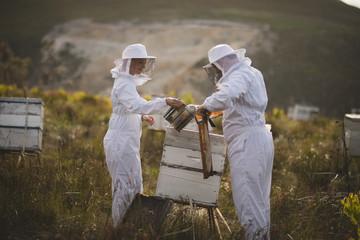 Beekeepers working on beehive on field