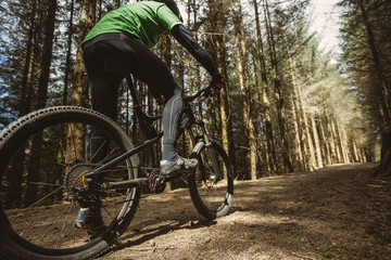 Low angle view of mountain biker riding in forest
