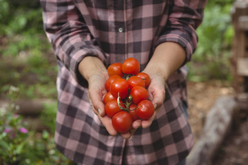 Woman holding fresh tomatoes in garden