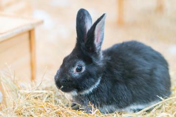 Rabbit sitting in the paddock