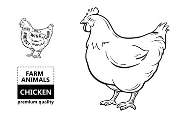 Cut of meat set. Poster Butcher diagram and scheme - Chicken. Vintage typographic hand-drawn. Vector illustration