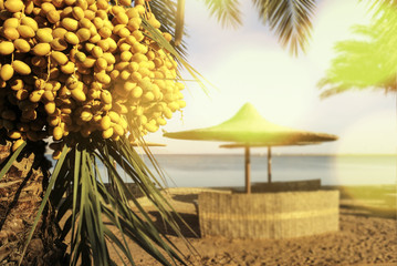 date palm on the beach on blur sea background