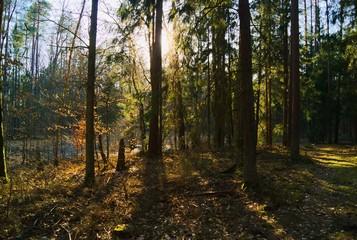 Wiosenny las podczas dnia