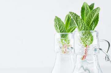 Elegant soft white summer background - young mint leaves closeup in transparent bottles with sparkling bubbles on light wood table, copy space.