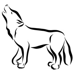 Wolf or dog, drawing in black lines