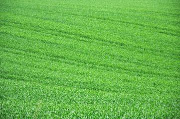 Wohltuende Lebensenergien, beruhigendes sowie frisches Planzengrün