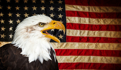 Wall Mural - Bald Eagle with American flag.