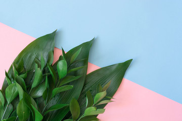 Tropical decorative leaves on a pink background. Top view. Close up.