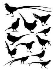 Pheasant animal detail silhouette. Vector, illustration. Good use for symbol, logo, web icon, mascot, sign, or any design you want.
